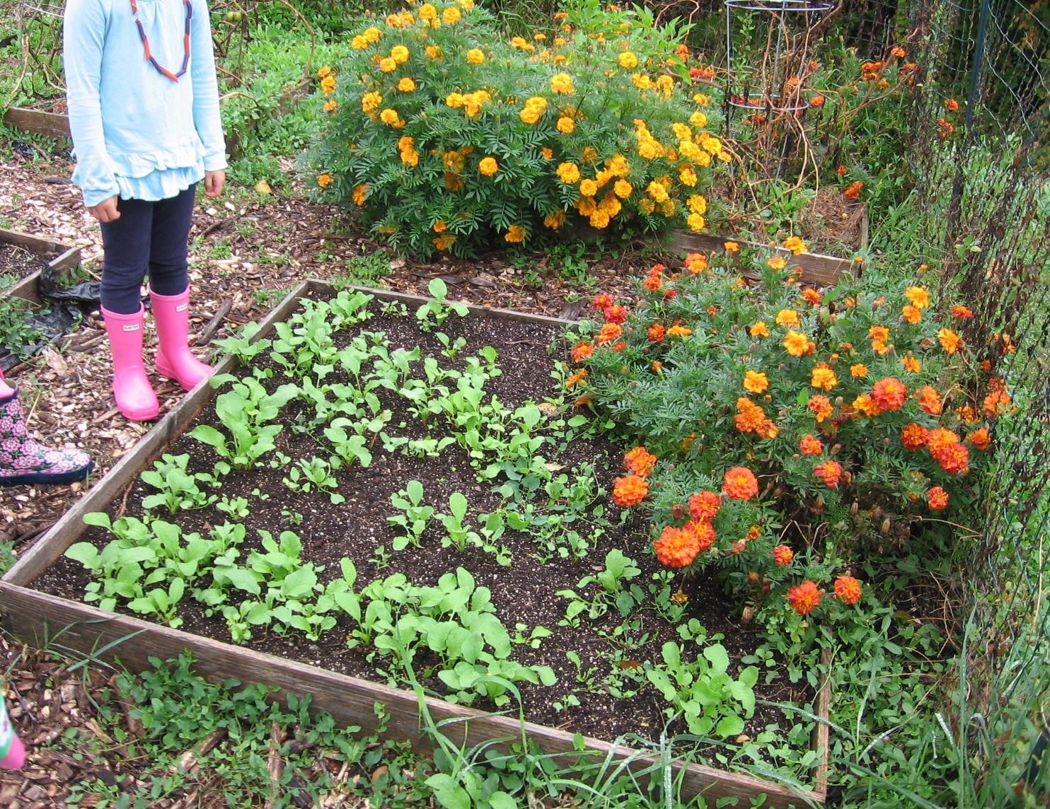 Children In Food Garden Images Pictures Becuo